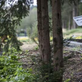 Loki-Schmidt-Garten